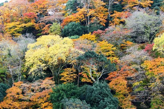 紅葉まっ盛り(嵐山)