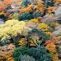 Photos: 紅葉まっ盛り(嵐山)