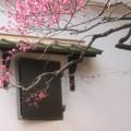 Photos: 蔵と梅