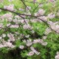 Photos: 春到来