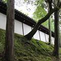 Photos: 東福寺(2)