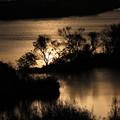 Photos: 淀川の水面に夕陽が