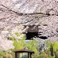 Photos: 伏見の十石舟