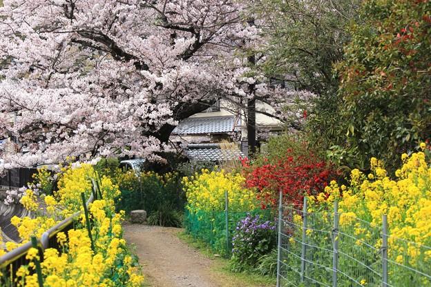 花いっぱいの散歩道