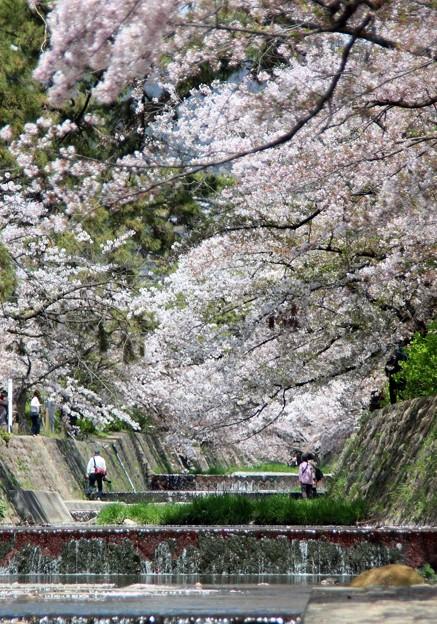 Photos: 夙川