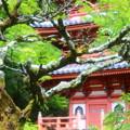 Photos: 三室戸寺の古木