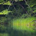 Photos: 中綱湖(白馬)