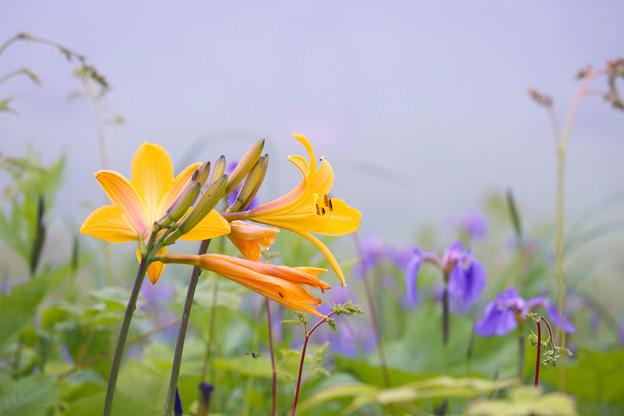 雲の中で咲く