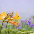 Photos: 雲の中で咲く