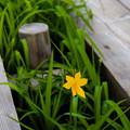 Photos: 木道に花