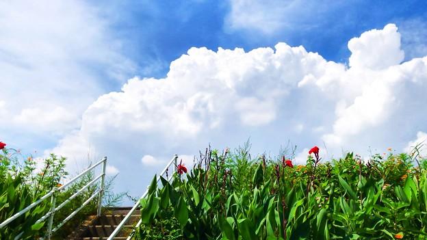 Photos: 夏空への階段