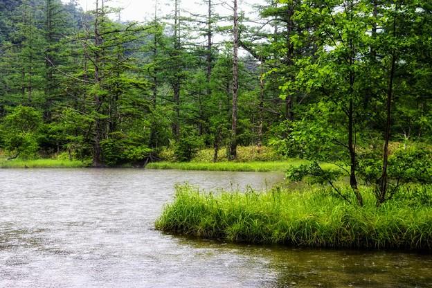 雨の明神池
