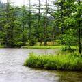 Photos: 雨の明神池