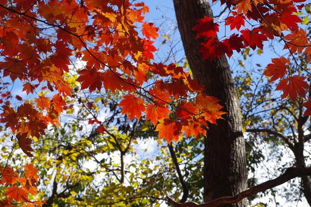 秋色みつけたよ