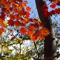 写真: 秋色みつけたよ