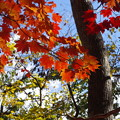 Photos: 秋色みつけたよ