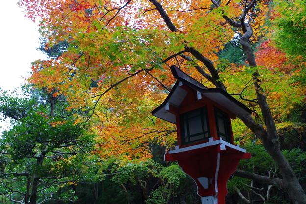 福井でみつけた紅葉