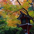 写真: 福井でみつけた紅葉