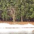 Photos: ようやくの雪