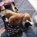 写真: ブルーとモニカの上を歩くミラ