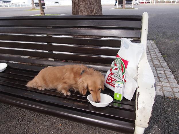 写真: 山下公園ベンチでオヤツ