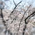 写真: (3)