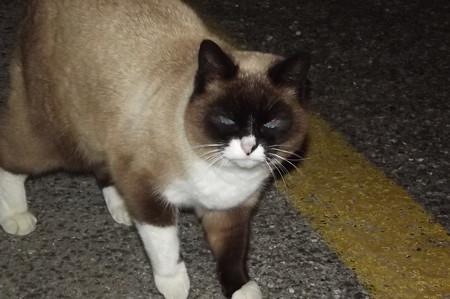サンマリノのネコ0130