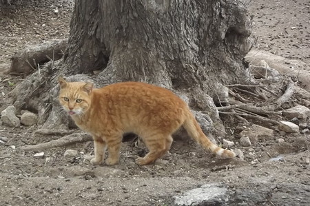 マルタのネコ0206