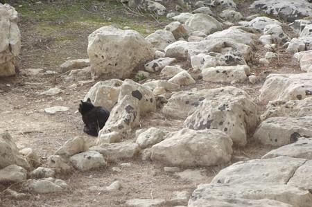 タルシーン遺跡のネコ0209