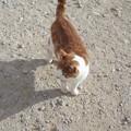 写真: ゴゾのネコ0215