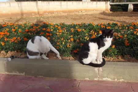 ゴゾのネコ0215
