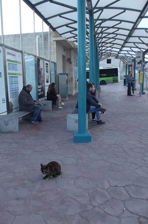 ゴゾのネコ0216