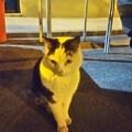 ビットリオーザのネコ0223