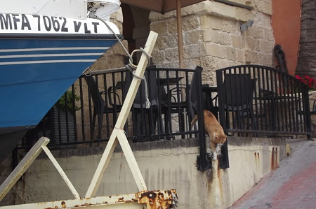 マルタのネコ0224