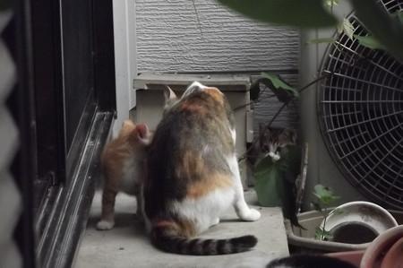 ミケママ&子ネコ0608