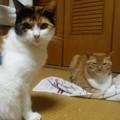 チグ&ミーシャ0617
