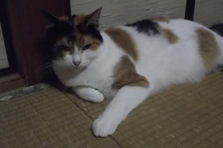 ミーシャ0925