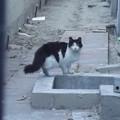 写真: アナハイムのネコ1009