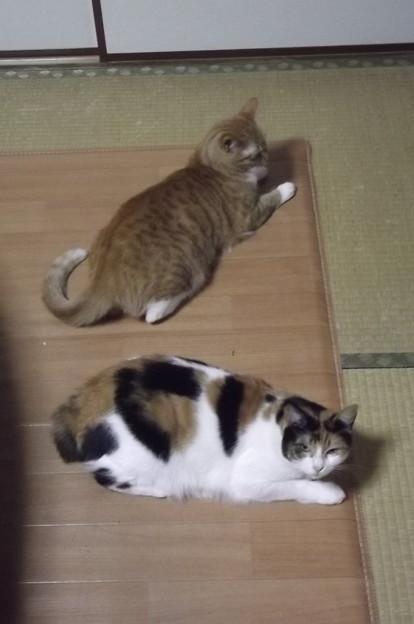 チグ&ミーシャ0118