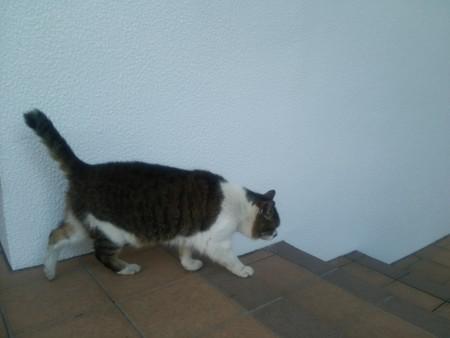 キジ白猫0322