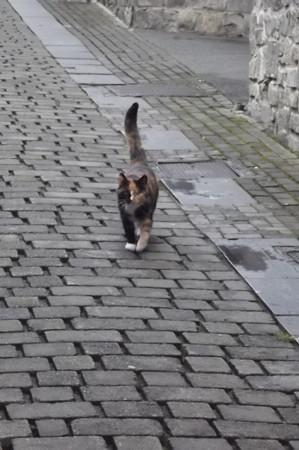 キルケニーのネコ0422