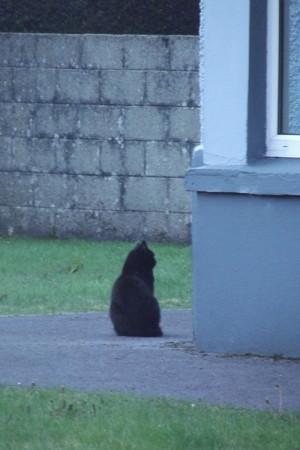 キラーニーのネコ0512