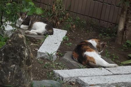 ミケママ&ミニジョー0605