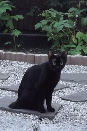 黒猫0815