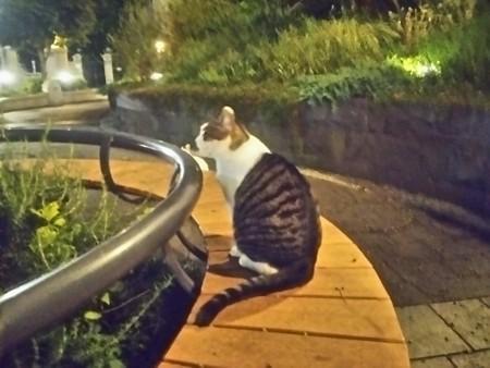 公園のネコ0828