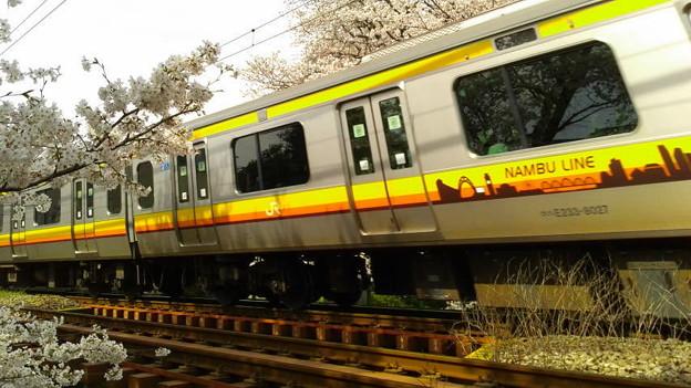 神奈川県川崎市多摩区、二ケ領用水の桜と南武線