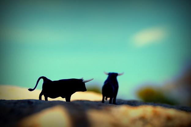 Photos: 牛の惑星