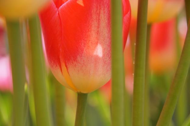 赤い花のささやき