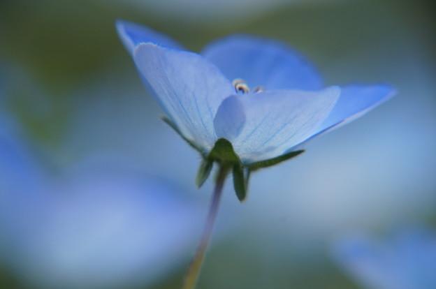 青い花のささやき