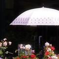 写真: 日傘さしかけて